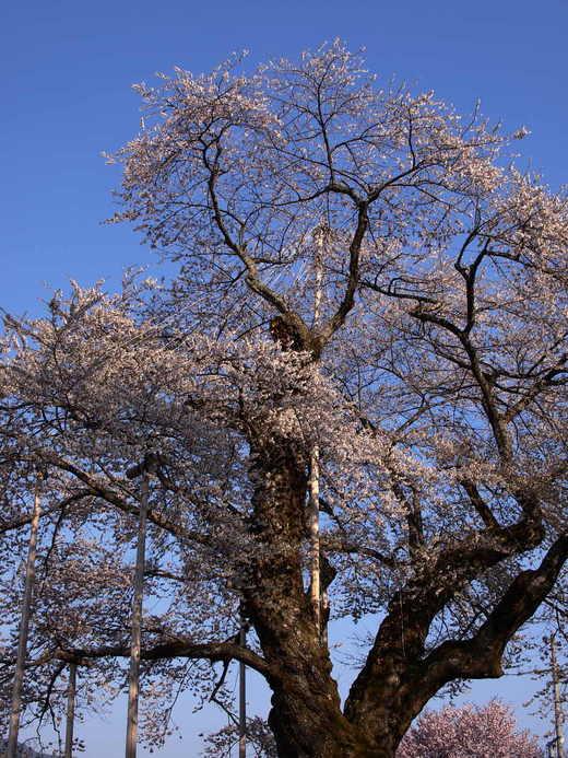 Syokawa_4280226ux