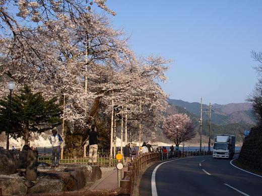 Syokawa_4280236x