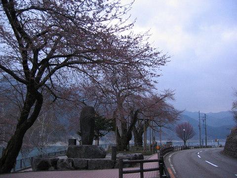 Syokawa_2242sv