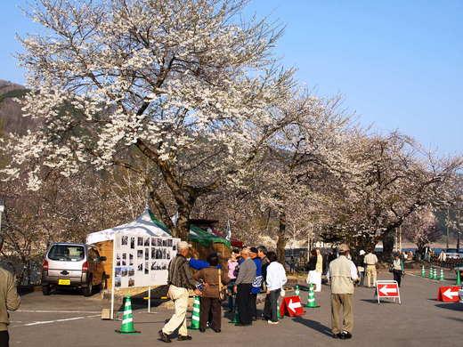 Syokawa_4280221x