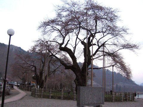 Syokawa_2250sv